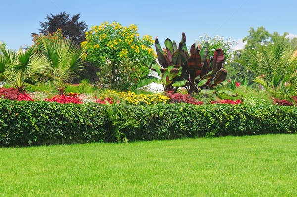 Blossoming flowerbeds in the park Stock photo © alinamd
