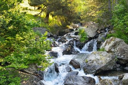 Hegy folyó tűlevelű erdő víz fa Stock fotó © alinamd
