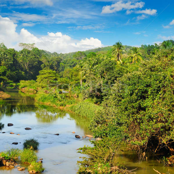 Tropical forest on the banks of the river and the blue cloudy sk Stock photo © alinamd