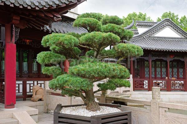 бонсай сосна пагода парка здании природы Сток-фото © alinamd