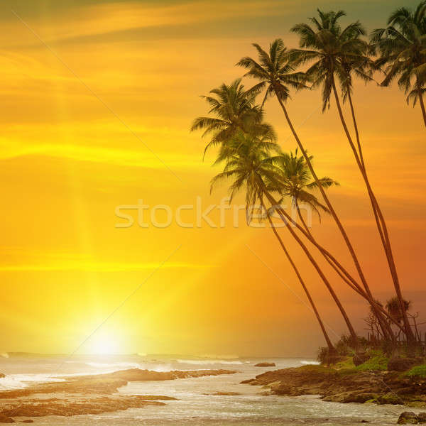 sun rise, tropical palm trees and ocean Stock photo © alinamd