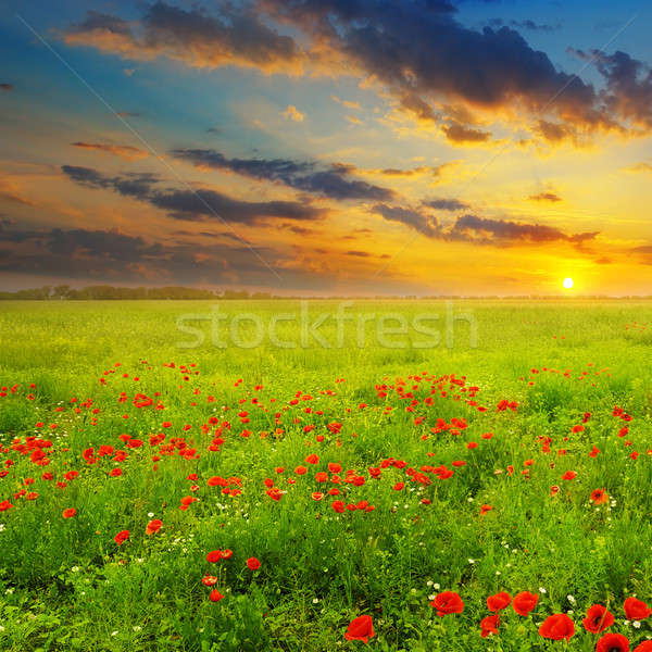 Field with poppies and sunrise Stock photo © alinamd