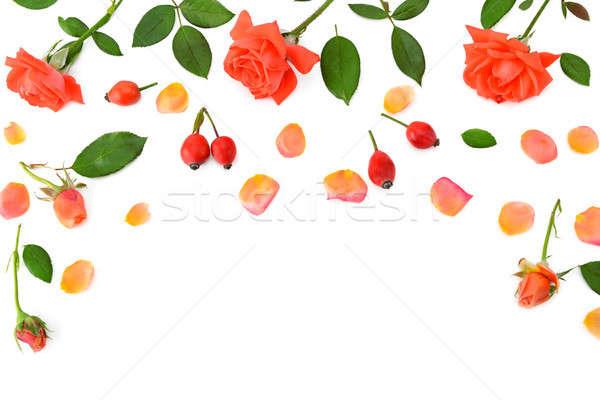Pembe güller yalıtılmış beyaz üst görmek Stok fotoğraf © alinamd