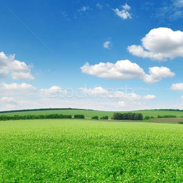 Güzel çiçekli alanları bulutlar bahar çim Stok fotoğraf © alinamd