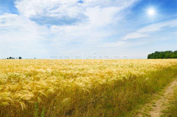 Stock photo: wheat field, sun and blue sky