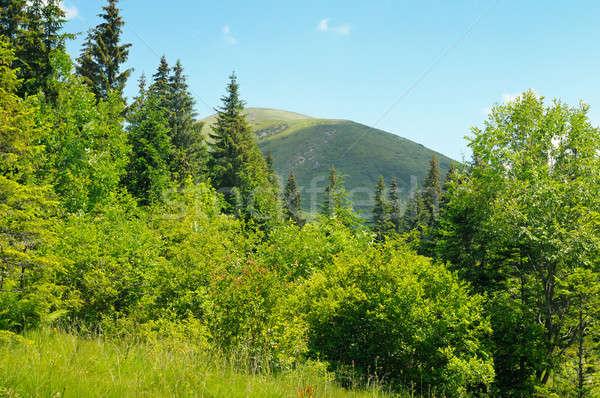 mountain peaks against the blue sky Stock photo © alinamd