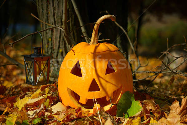 pumpkin-head and autumn forest Stock photo © alinamd