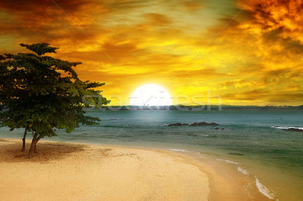 Zee fantastisch zonsondergang strand boom water Stockfoto © alinamd