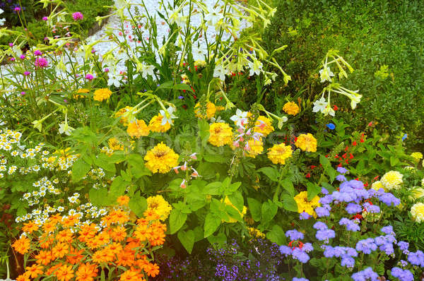 Bright flowerbed in a summer park. Stock photo © alinamd
