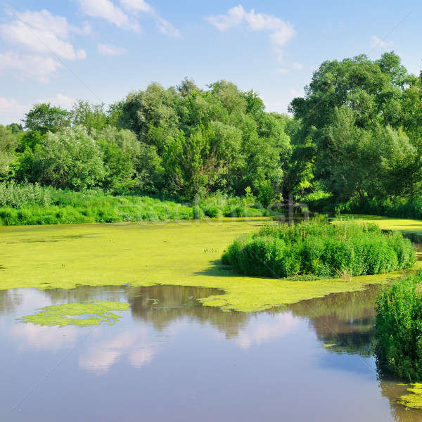 pond with water plants Stock photo © alinamd