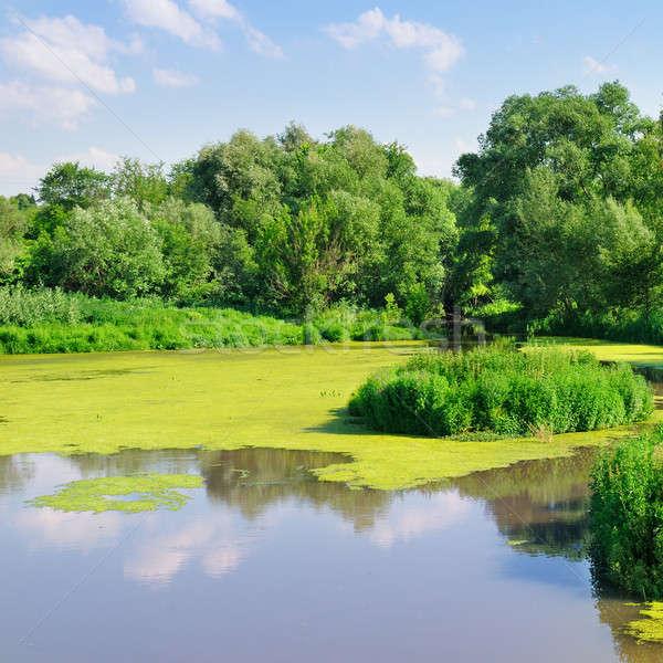 Vijver water planten wolken hout bos Stockfoto © alinamd