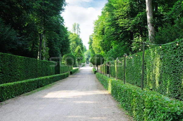 Beautiful alley in the park Stock photo © alinamd