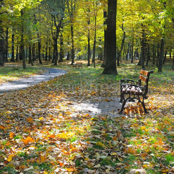 autumn park with paths and benches Stock photo © alinamd