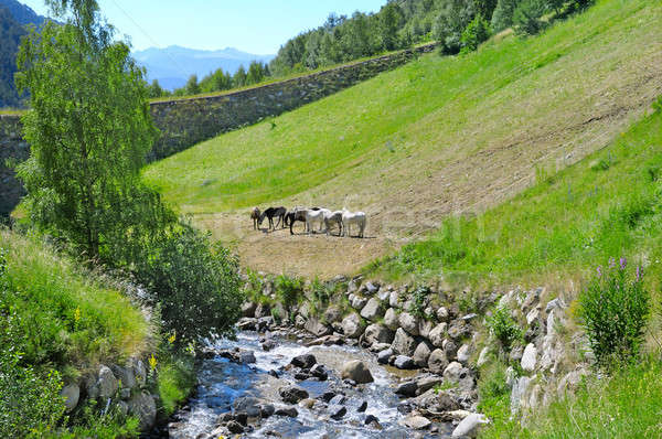 picturesque mountain valley, river and sky Stock photo © alinamd