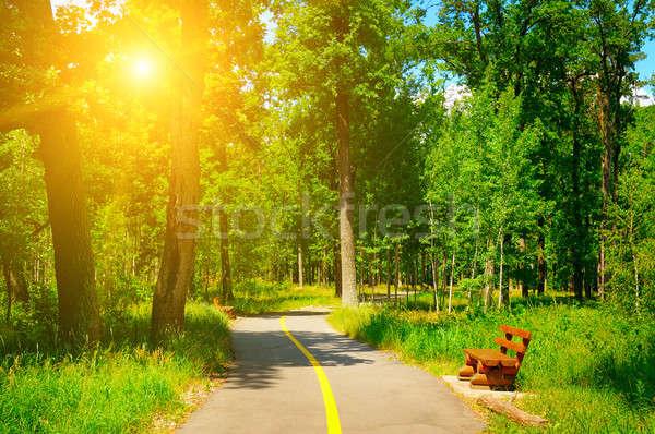 summer park with beautiful walking paths Stock photo © alinamd
