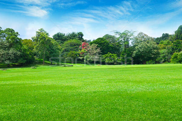 park, green meadow and blue sky Stock photo © alinamd