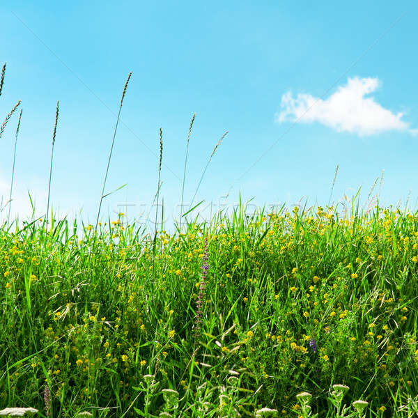 meadow and beautiful blue sky Stock photo © alinamd
