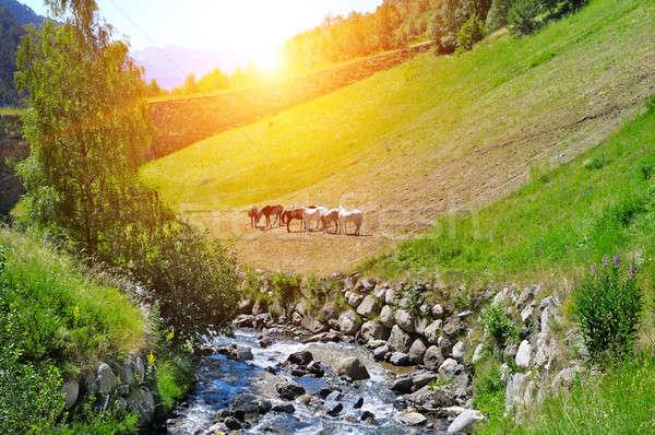 Pittoresque montagne vallée rivière sunrise ciel Photo stock © alinamd