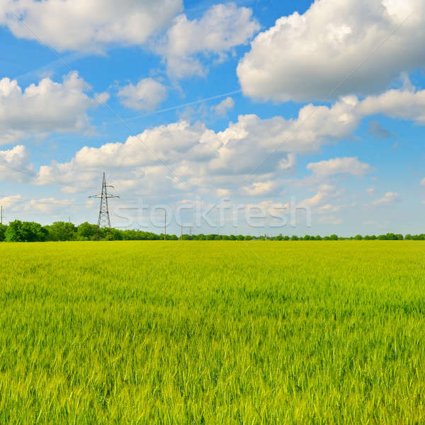 green field and blue sky with clouds Stock photo © alinamd