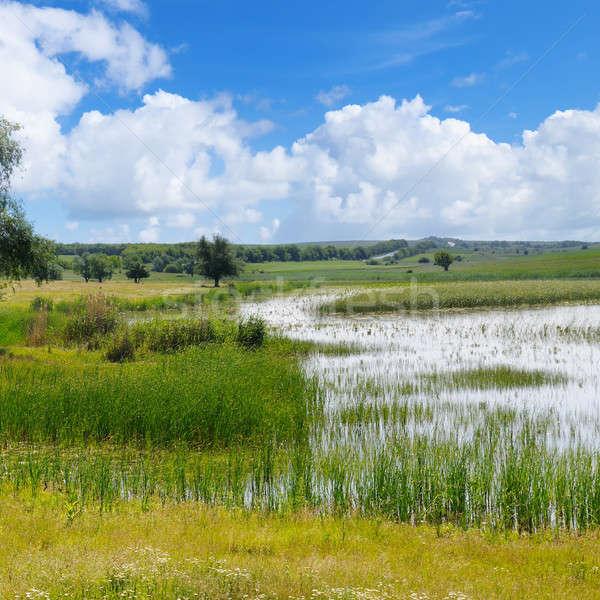 Oude meer aquatisch vegetatie hemel pittoreske Stockfoto © alinamd