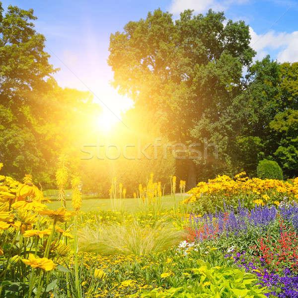 Yaz park güzel gökyüzü çiçekler ağaç Stok fotoğraf © alinamd