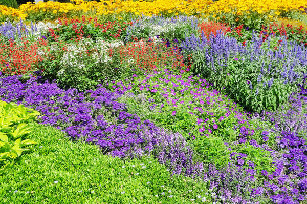 Beautiful background of garden flowers Stock photo © alinamd