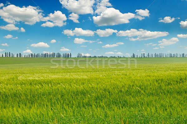 Groene veld blauwe hemel wolken licht voorjaar Stockfoto © alinamd