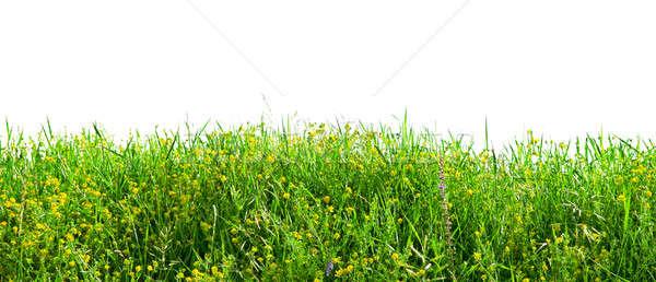 herbs isolated on white background Stock photo © alinamd