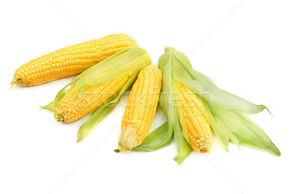 Stock photo: Corn cobs isolated on a white background