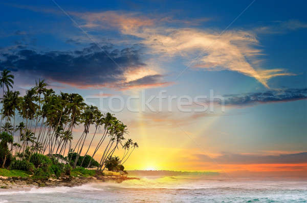 ocean, tropical palms and a beautiful sunset Stock photo © alinamd