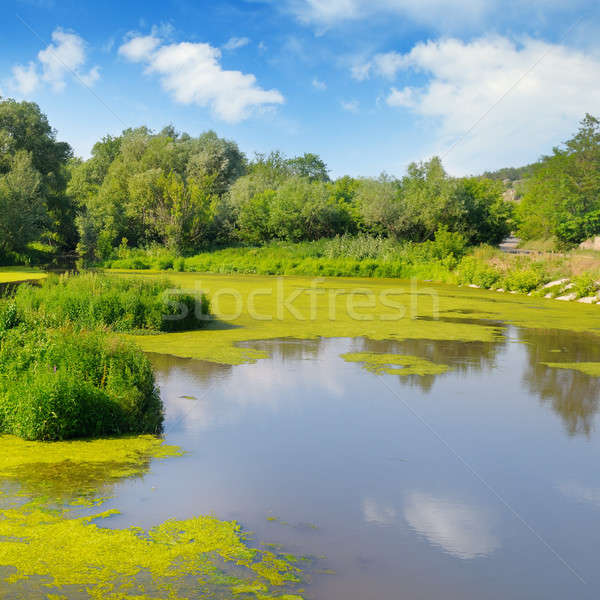 Wet lake with aquatic vegetation. Stock photo © alinamd