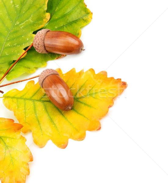 Foto d'archivio: Rovere · foglie · foresta · sfondo · verde · colore