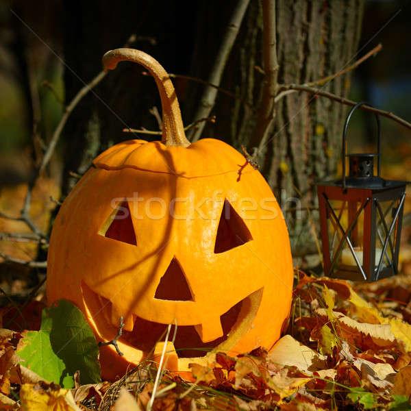 Zdjęcia stock: Jesienią · lasu · drzewo · uśmiech · szczęśliwy · owoców