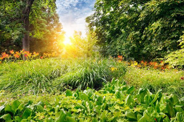 Nyár park gyönyörű virágágy égbolt fű Stock fotó © alinamd