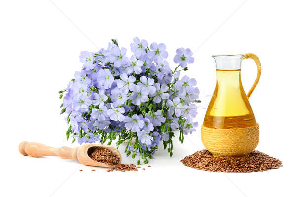 seed oil and flax flowers Stock photo © alinamd
