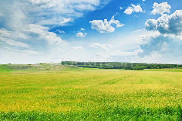地形 青空 美しい 春 草 木材 ストックフォト © alinamd