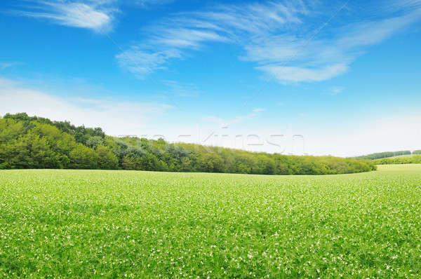 Mooie bloei velden wolken voorjaar gras Stockfoto © alinamd
