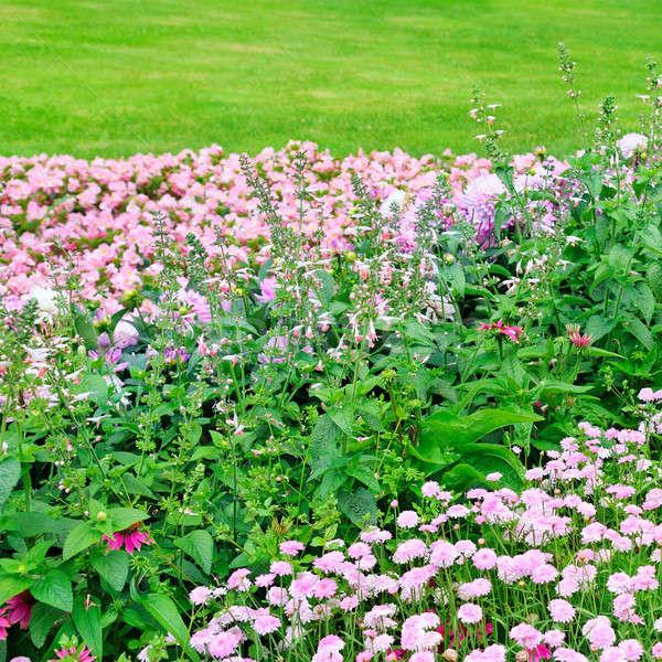 Belle parterre de fleurs été parc printemps herbe Photo stock © alinamd