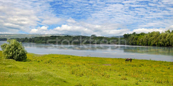 Plain river, meadow and floodplain forest Stock photo © alinamd