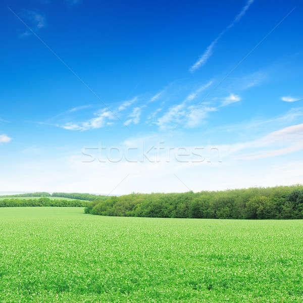 Bloei veld heldere blauwe hemel wolken voorjaar Stockfoto © alinamd