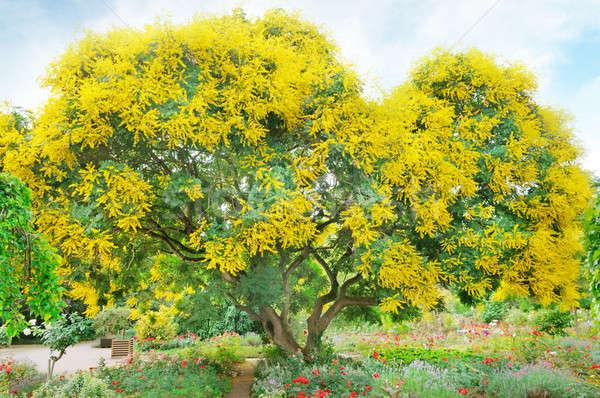 ツリー 黄色の花 夏 公園 空 道路 ストックフォト © alinamd