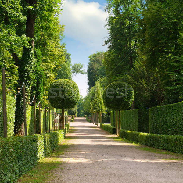summer park with a beautiful avenue Stock photo © alinamd