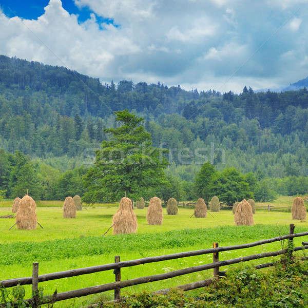 Berg vallei bos groene boerderij bergen Stockfoto © alinamd