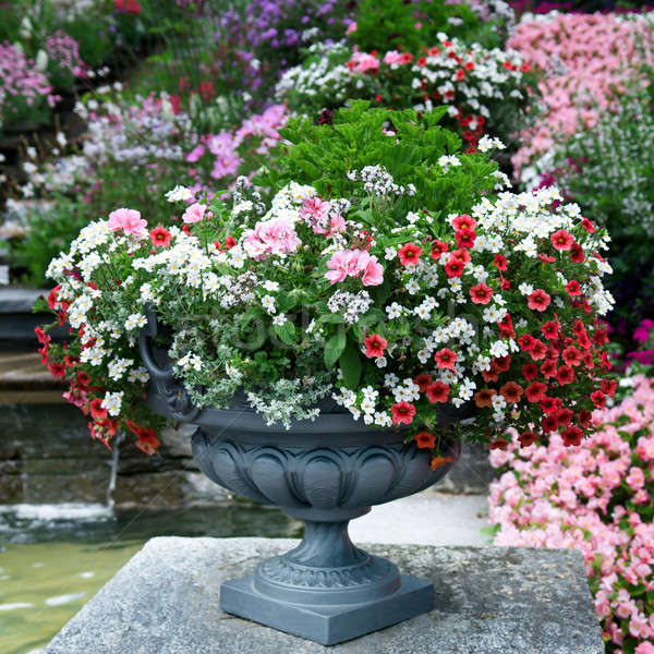 luxury flower bed in a vase Stock photo © alinamd