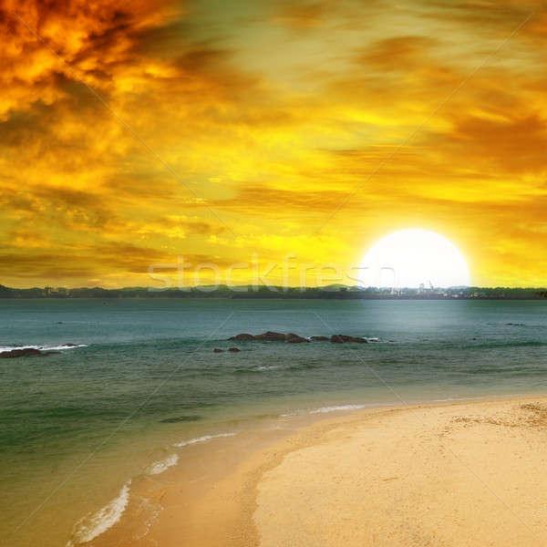 Mer plage arbre fantastique coucher du soleil eau Photo stock © alinamd