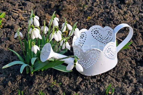 春 じょうろ 地上 自然 葉 背景 ストックフォト © alinamd