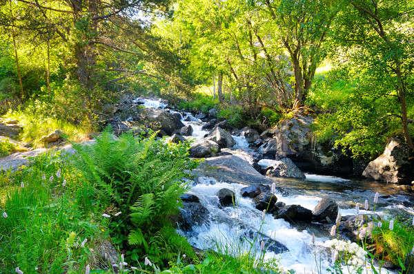 Manzara dağlar orman nehir güzel Stok fotoğraf © alinamd