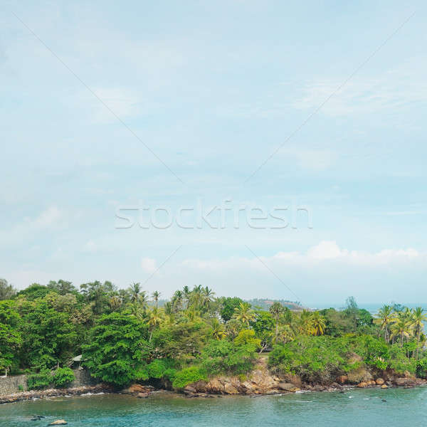 tropical palm trees and waterscape Stock photo © alinamd