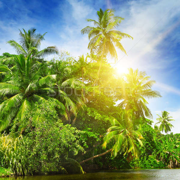 Stock photo: Tropical palm forest on the river bank