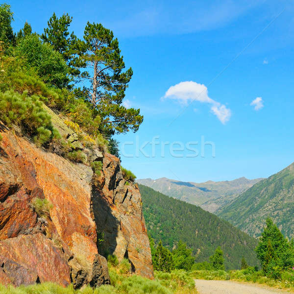 Scenic mountain landscape with cliff and pines Stock photo © alinamd